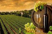 Lebanon Winery Tour