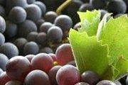 Wine & Foie Gras Tasting in Batroun with Byblos & Beyond