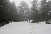 Hiking on the Snow in Shouf Biosphere Reserve with Footprints Nature Club