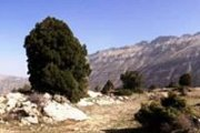Hiking Afqa's plateau, Juniper trail with Byblos & Beyond