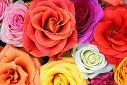 Flowers Market 2014