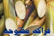 فراكة مفتوحة مع الديجي الواد قصب مص - Frakheh Maftouha