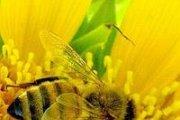 Honey Days at MACAM