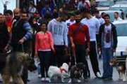 Dog Walking with the Largest Number of Dogs in Beirut
