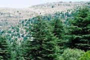 Hiking in Horsh Ehden with Footprints