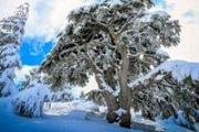 B2h to Barouk Snowshoeing