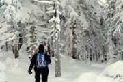 """""""We like fresh snow..."""" - Snowshoeing Tannourine reserve with The Wolves Clan"""
