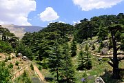 Hiking and Yoga at Al Shouf Cedar's Reserve with BYC