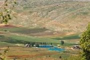GREEN STEPS planting Cedars, hiking and picking Grapes in Kfarmishki - Bekaa