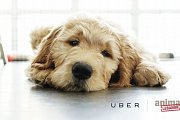 Uber Puppies Thursday!