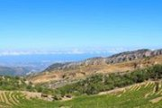 GREEN STEPS in Batroun mountains for Wine Tasting and special lunch