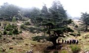 Unspoiled Cedars & Trails of Bshenneta with Esprit Nomade
