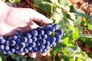 Rediscover Lebanese Wine