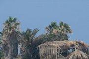 Palm Island Trip with Vamos Todos
