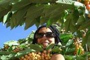 Cherry Picking Akoura!