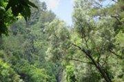 Shuane Lake Hiking with Vamos Todos