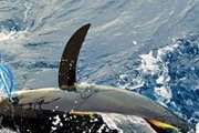 Tuna BBQ by Batroun Water sports