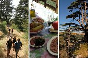 Tannourine Cedar Reserve - Guided Hike with Lunch