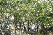 Soft Hike Hsar Raachine to Bayader Achkout