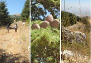 Shouf Biosphere - Guided Hike Barouk to Ain Zhalta with Lunch