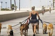 Beirut Dog Walk Event September 2016