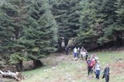 Hiking in Qobayyat Cedars Forest with Footprints