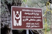 Hiking from Bchaaleh to Douma with Baldati
