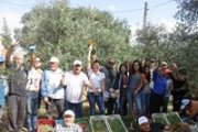 Olive Picking Day at Chabtine with Dale Corazon