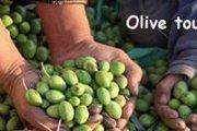 Olive tour Jezzine with Lebanese Adventures