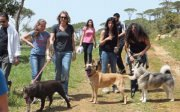 Hike and Lunch with dogs in Beit Mery