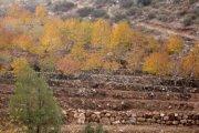 Autumn Colors & Prairies around Mamboukh with ESPRIT NOMADE