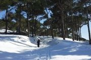 Snowshoeing in Falougha Pine Forest with Footprints Nature Club