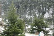Snowshoeing in Shouf Reserve - Ain Zhalta