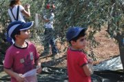 Cueillette d'olives a Koura avec NEO KIDS