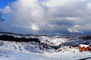 Soft Snowshoeing at Arz Tannourine with Green Steps