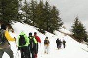 Snowshoeing Al Barouk Cedars Reserve with WALK LEB