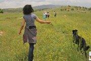 Birket Zaarour-mtein Walk with your dog  / Marche avec ton chien