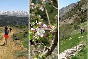 The Cedars of Tannourine – Guided Hike with Lunch