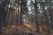 Hiking to Horsh Ehden