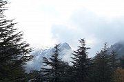 Hadath El-Jebbeh Cedars Hike with Wild Adventures