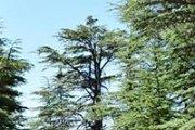 Hiking Hadath el Jebbeh Forest