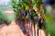 Divine Wine Tasting Tour in Kfifane with Adventures in Lebanon