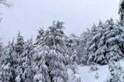 Ehden Reserve Snowshoeing with Wild Adventures