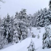 Ehden Reserve Snowshoeing with Wild Adventures