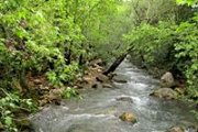 Bisri River Hike with Wild Adventures