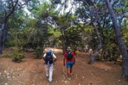 Imar forest & Bshennata Hike with Kazdoura