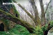 Hiking Mokhtara-Bater with Backpacker