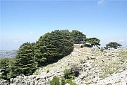 Jaj Cedars Forest Hike with Adventures in Lebanon