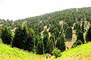 Karm Chbat Forest Hike With Wild Adventures