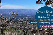 Cherry Blossom at Nabi Ayla with Lebanon Stories